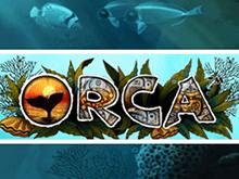Orca - автоматы Адмирал