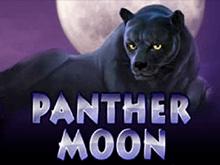 Panther Moon - игровой автомат на деньги